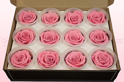 Geconserveerde rozen Roze M DOOS12 Geconserveerd