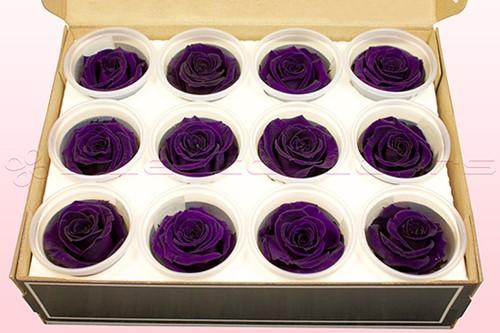 Geconserveerde rozen Paars Purple M DOOS12 Geconserveerd