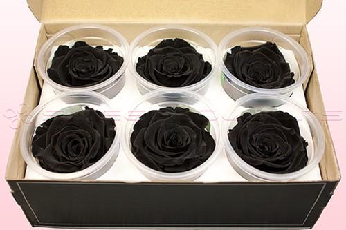 Geconserveerde rozen Zwart L Doos6 Geconserveerd