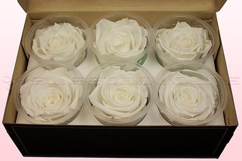 Geconserveerde rozen WIT XL Doos6 Geconserveerd