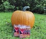 Cronus PMT F1 Halloweenpompoen - basiseenheid Halloweenpompoen