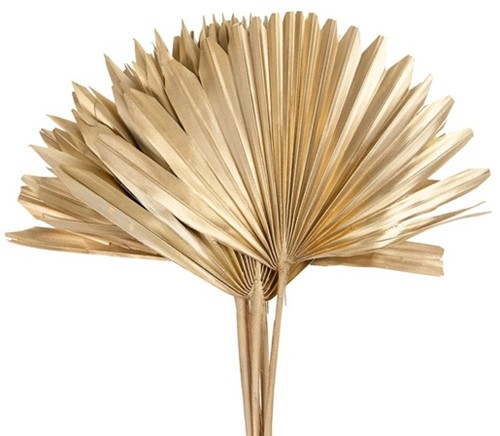 Sun spear 6pc 37x56cm - Goud Palmspear Groot blad