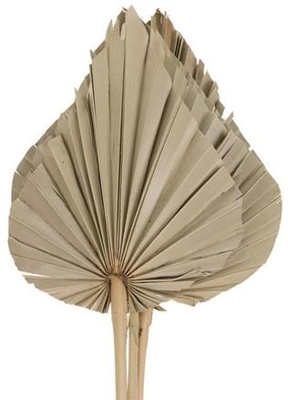 Palm spade 4pc 23x62cm - Natural Palmspear Groot blad