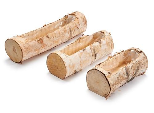 Birch Berkenstam planter 19cm