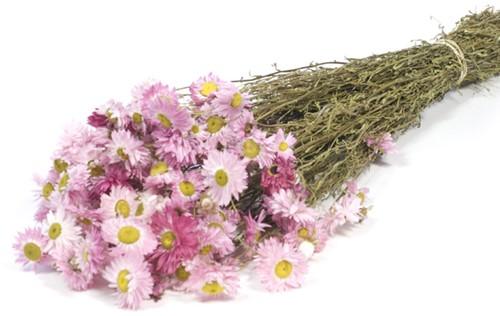 Acroclinium pink natural SB bundel. droogbloemen