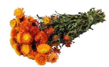 Helichrysum Oranje natural bundel. droogbloemen