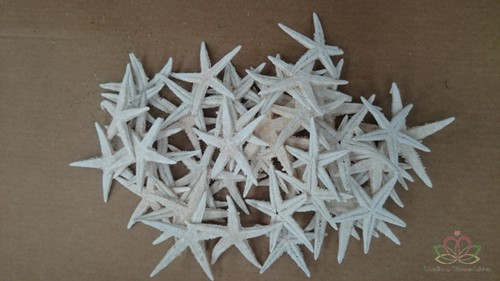 Zeesterren +/-10cm Misty White zak 50 stuks Starfish
