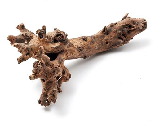 Mulberry root  wortelstronk 40-50 cm. naturel Grote stronk