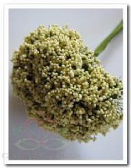 Fieldberries Creme/ bundel voor bloemschikken Fieldberries Cr