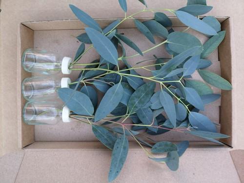 3 Flesjes bloemen Eucalyptus in een doosje Een groet die iets doet