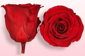 Geconserveerde rozen Rood M Doos12 Geconserveerd