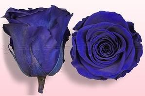 Geconserveerde rozen Blauw L Doos6 Geconserveerd