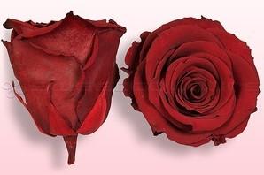 Geconserveerde rozen DONKERRood L Doos6 Geconserveerd