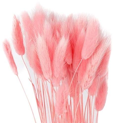 Lagurus Ovatus bundel +/- 60st Roze Pluimgras graspluimen