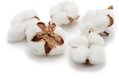 Katoenbollen Cotton balls  los 12 stuks