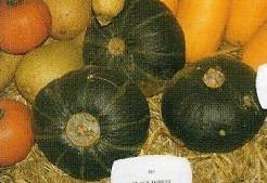 Black forest kabocha - basiseenheid Black forest kabocha