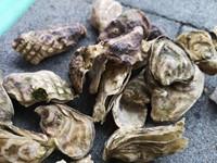 Oesterschelpen geboord fijn, 250 gram-2