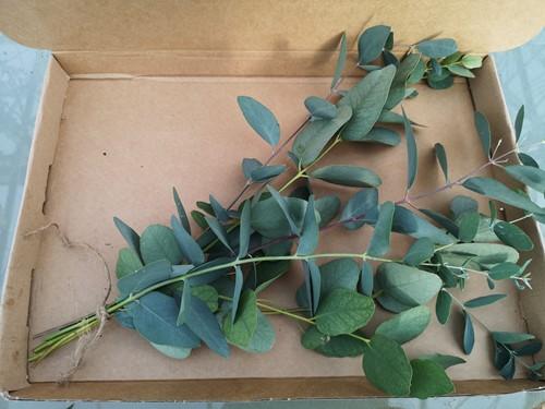 Eucalyptus toefje door de brievenbus geurend miniboeketje