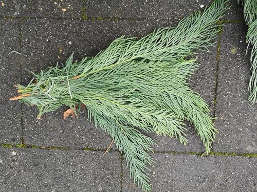 Kort coniferengroen +/- 10cm bundel grijsgroen Mooi coniferengroen klaar voor gebruik