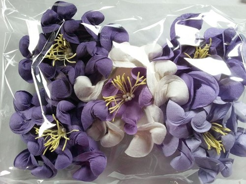 Mulberry Gardenia Mixed Purple Big PAK5 Mulberry Gardenia