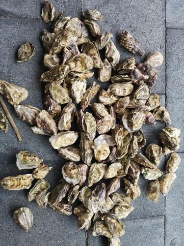 Oesterschelpen 500 gram. fijn fijn, 500 gram