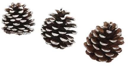 Denneappel Pine Cone White Tip 20 st Dennenappel