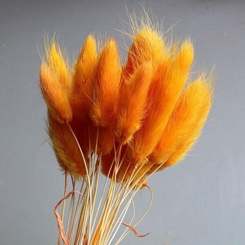Lagurus Ovatus bundel +/- 60st Oranje OkerGeel Pluimgras graspluimen