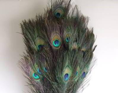 Pauw veren 60cm Lang Pak +/- 5 stuks Peacock feather natural