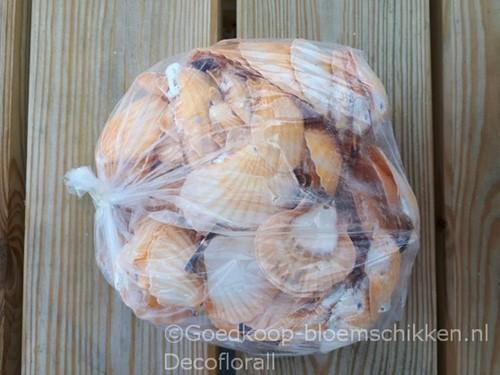 Pecten Vexillum orange ±4cm. 1kg GEBOORD 1 kilo! geboord, oranje, 1 kilo