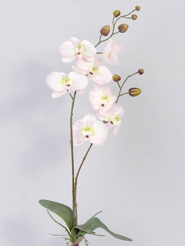 Orchidee Phalaenopsis Zachtroze PLANT blad en wortels  Zijdebloem 2tak 7bloemen 75cm