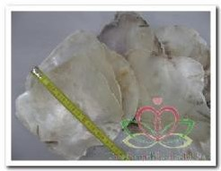 Placuna Placenta naturel / zak 1 kg GEBOORD geboord, naturel, 1 kilo