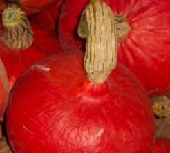 Red Kuri - basiseenheid Red Kuri