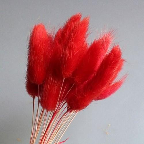 Lagurus Ovatus bundel +/- 60st Rood Pluimgras graspluimen