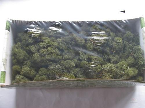 Rendiermos Ijslandsmos MOS-MOSGroen +/- 250-500 gram Rendiermos Ijslandsmos +/
