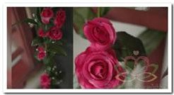 Rozen zijde bloemen guirlande Fuchsia nr 005 Rozen zijde bl