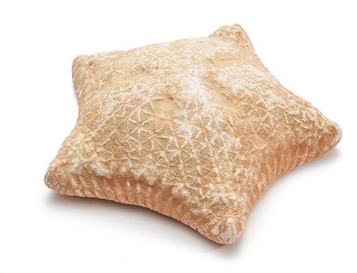 Zeester - Pillow starfish   20-25cm per stuk