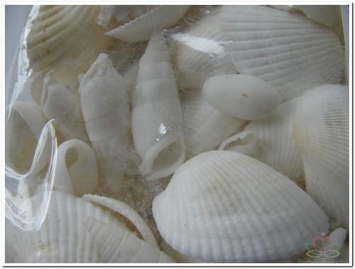 Schelpenmix Wit +/- 100 gr Schelpen kleinverpakking