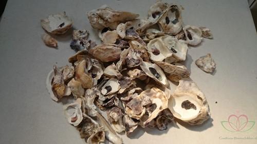 Oesterschelpen 400 gram