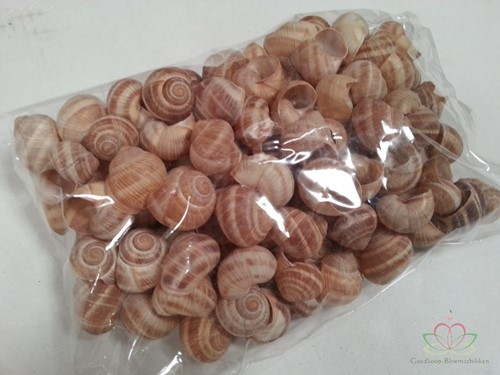 Landsnail small naturel 250 gram Landslak schelpen