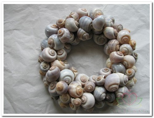 Nattai - Polinices schelpen grijsbruin, 1 kilo
