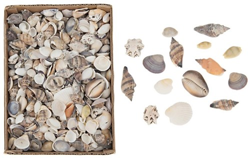 Shell mix small 1020gram. in box 15x20x6cm. Natural naturel, 1020 gram