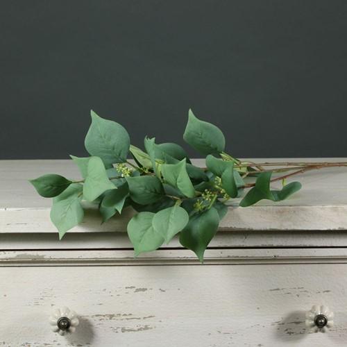 Eucalyptusblad Seeded Eucalyptus vertakt  prachtige kwaliteit