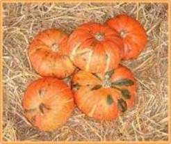 Sritong 028 F1 Kabocha Oranje