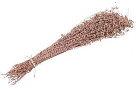 Lino Grass Vlas Linum Bundel Orange 100 gr   droogbloemen