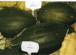 Vert Olive Vert Olive