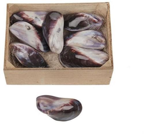 Oester dubbel violet parelmoer, 8 stuks