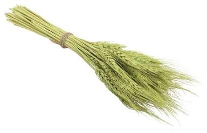 Tarwe Wheat 75 gram. green Tarwe Wheat 75 gram.