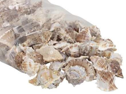 White Chimman schelpen 500 gram