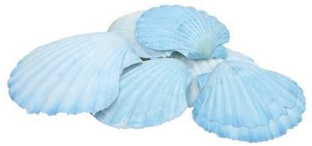Schelp Fan Chippy Giant light blue/dark blue 6 stuks blauw, 6 stuks
