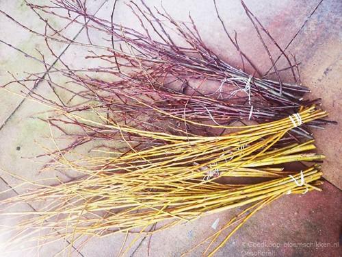 Wilg Salix Caprea Roodbruin bundel +/- 10st Voorjaarstakken